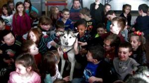 Run By Dogs Schenectady Glenville Niskayuna dog sledding education musher